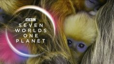 seven-worlds-one-planet-2019-2